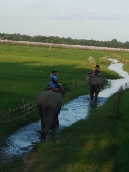 Elephants on tigress capture mission